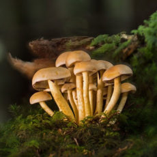 Что будет, если регулярно употреблять галлюциногенные грибы?